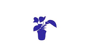 Comptoir du mobilier Plantes et Arbustes